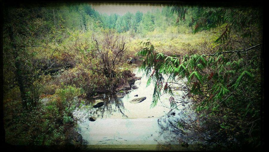 Powellriver- Duck Lake