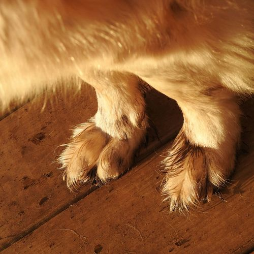 Dirty dog feet Outdoors No People One Animal Mammal Dog Feet Doglover Feet Love Dirty Feet Dirt Dirty Dog Dogslife Dog Life Dog Lifestyle Living With Dogs