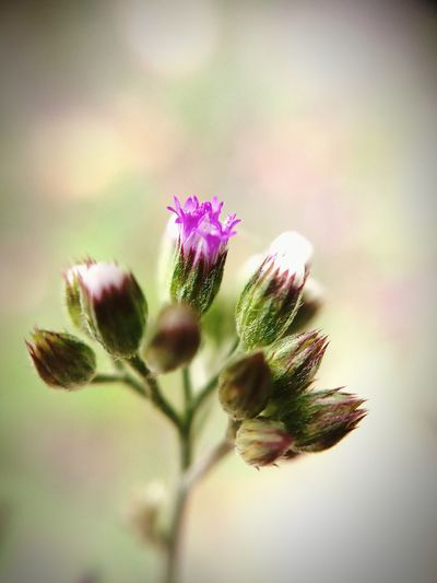 beauty beyond imagination... Flower Closeup Closeview Microlensphotography❤ Bud Perspectives on Nature Dramatic Angles Light And Shadow Focus on the Story Focused Photo EyeEm Selects Closeup Photography Perspective Flower Head Flower Thistle Pink Color Petal Purple Uncultivated Close-up Sky Plant