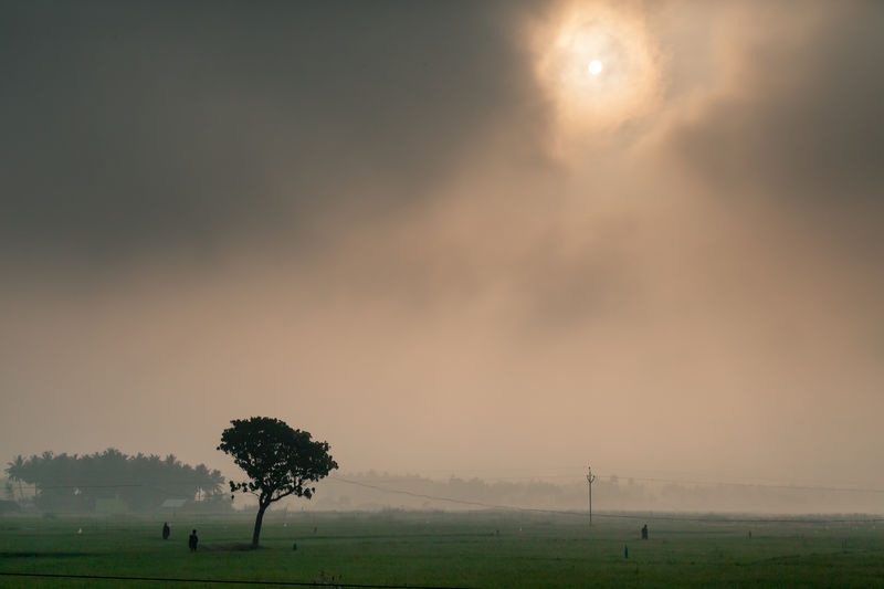 Misty Sunrise India Travel Photography Beauty In Nature Cloud - Sky Environment Field Fog Grass Land Landscape Nature Non-urban Scene Outdoors Plant Scenics - Nature Sky Sun Tranquil Scene Tranquility Tree