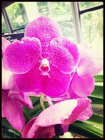 Flower Robert's Delight Washington, D. C. Botanical Gardens