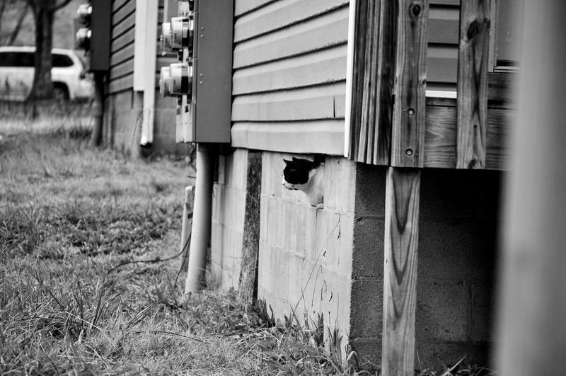 Cat peeking out Blackandwhite Cat Built Structure Day Architecture Building Exterior No People Outdoors Metal Nature