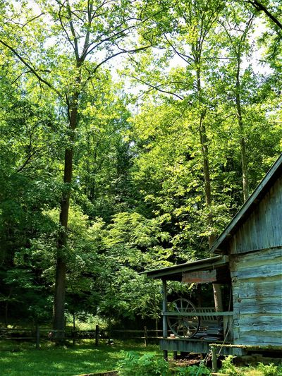The Cabin Indiana Porch Trees Architecture Beauty In Nature Building Building Exterior Built Structure Cabin Cabin In The Woods Day Foliage Forest Green Green Color Growth House Land Lush Foliage Nature No People Outdoors Plant Tranquility Tree