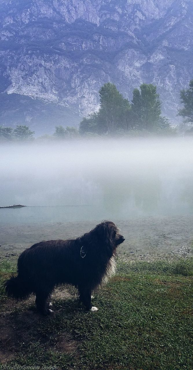 mammal, animal themes, animal, domestic, one animal, pets, domestic animals, fog, plant, vertebrate, land, grass, beauty in nature, no people, nature, non-urban scene, water, field, outdoors, herbivorous