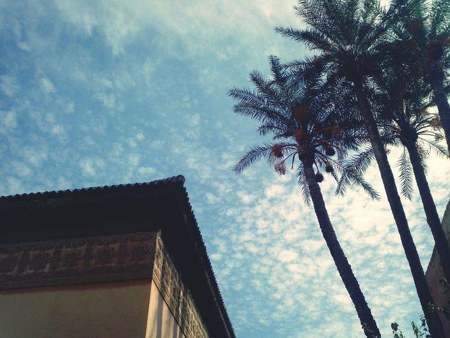 maroc architecture and palms Low Angle View No People Cloud - Sky Tree Sky Built Structure Growth Day Building Exterior Outdoors Architecture Nature Palms Trees EyeEmNewHere Traveling Travel Destinations Maroc ❤️ Beauty In Nature Nature In The City Contrast In Nature Cultural Tourism Maroccan Architecture Urban Landscape Urban Exploration Marakesh Summer Exploratorium