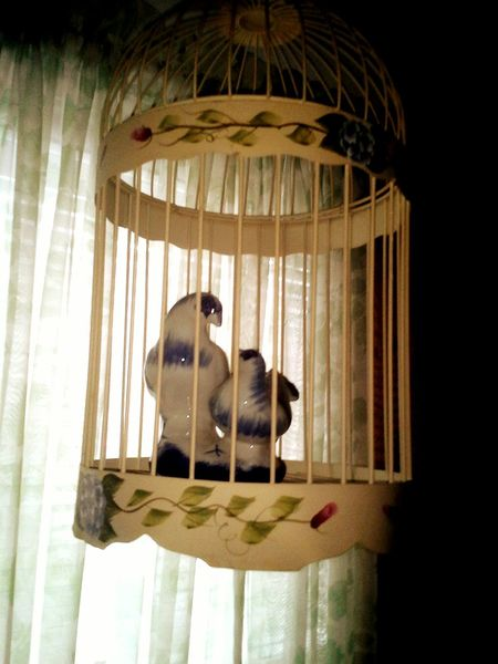 Paulette's Photograph, From 2015  Hello World , caged, yet, still LOVE!