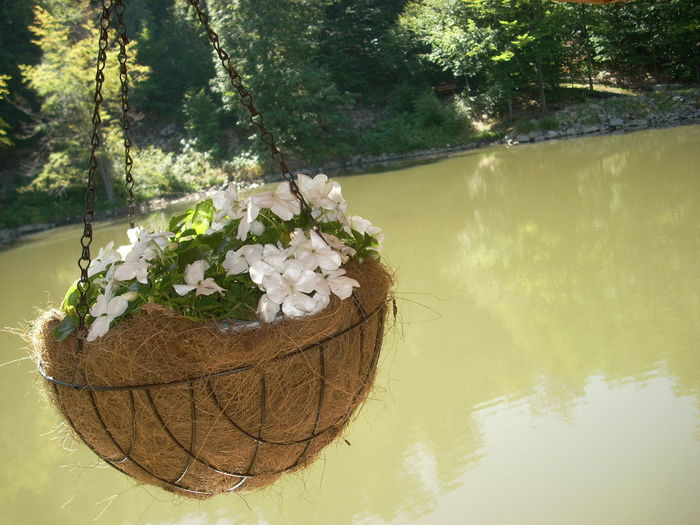 Water Plants And Sun Beauty In Nature Freshness Trees And Leaves Outdoors Day Green Day
