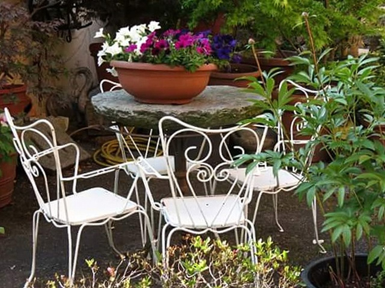 flower, potted plant, plant, front or back yard, growth, flowerbed, outdoors, no people, day, table, chair, nature, freshness