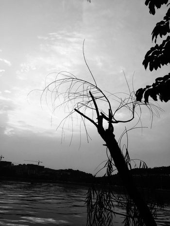 Hello November November Blacknwhite Blackandwhite withered.? But the temperature is still up to 30 degrees.