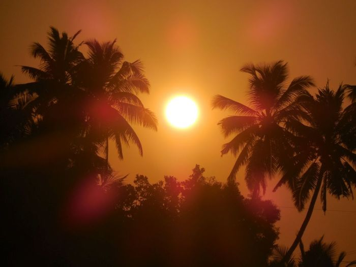 Sunrise - Dawn Beauty In Nature Serenity Nature Landscape ABeautifulMorning Freshness Palm Tree Tree Silhouette Sunset Sky Tropical Climate Outdoors Low Angle View No People Scenics Night Nature Beauty In Nature