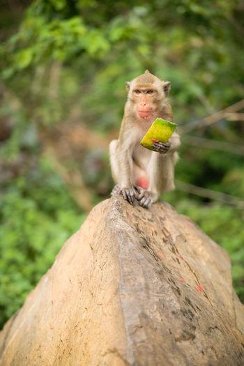 Monkey sitting on rock