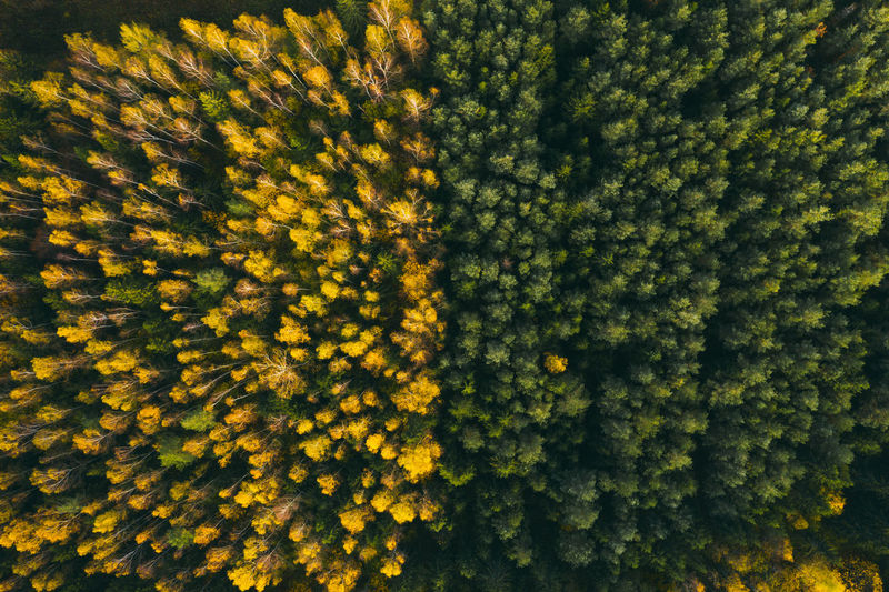 Colourful autumn in forest spots in green and yellow captured from above with a drone.