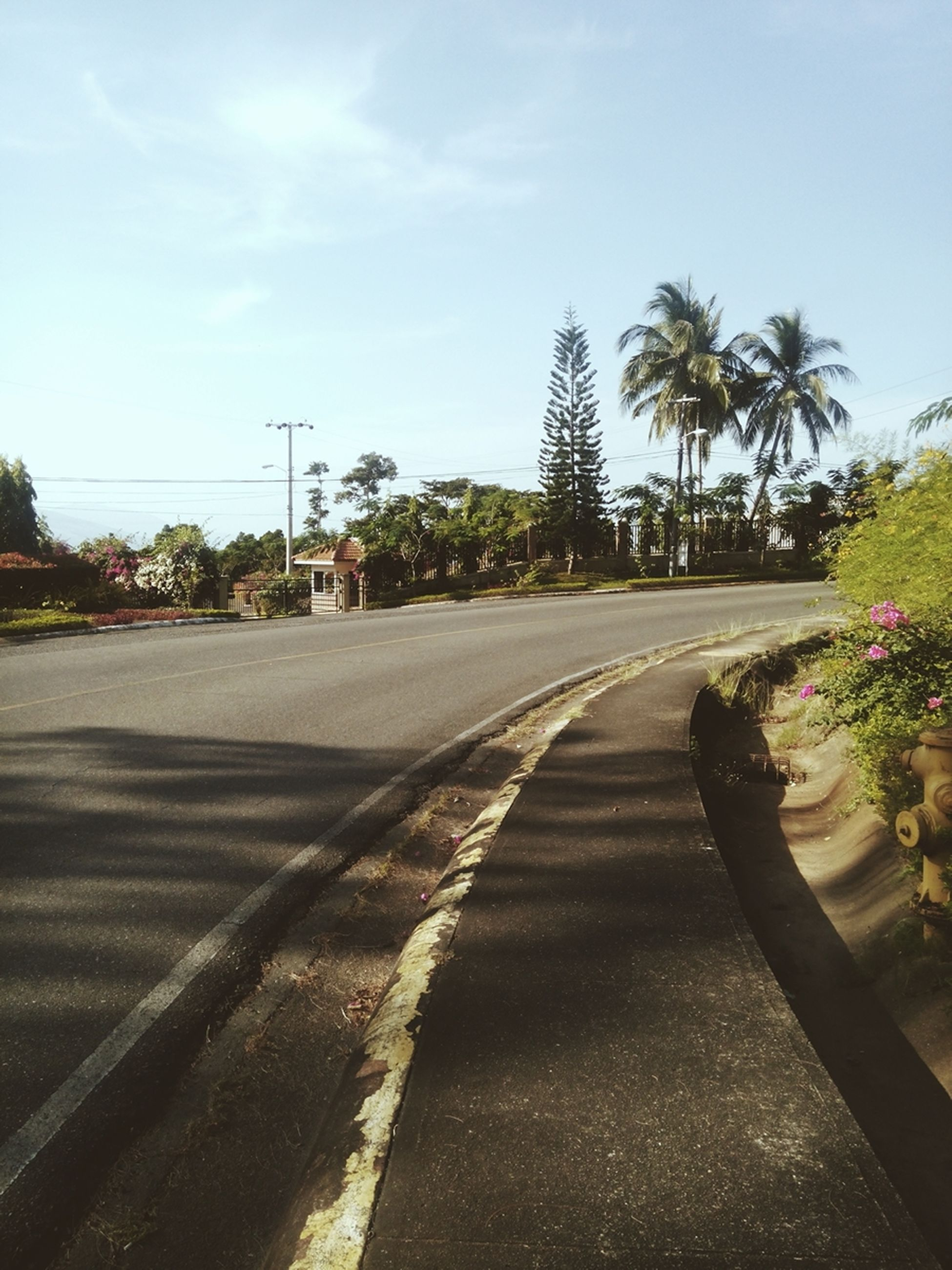 tree, palm tree, road, sky, transportation, the way forward, street, sunlight, growth, tranquility, shadow, tranquil scene, car, nature, day, land vehicle, diminishing perspective, outdoors, clear sky, incidental people