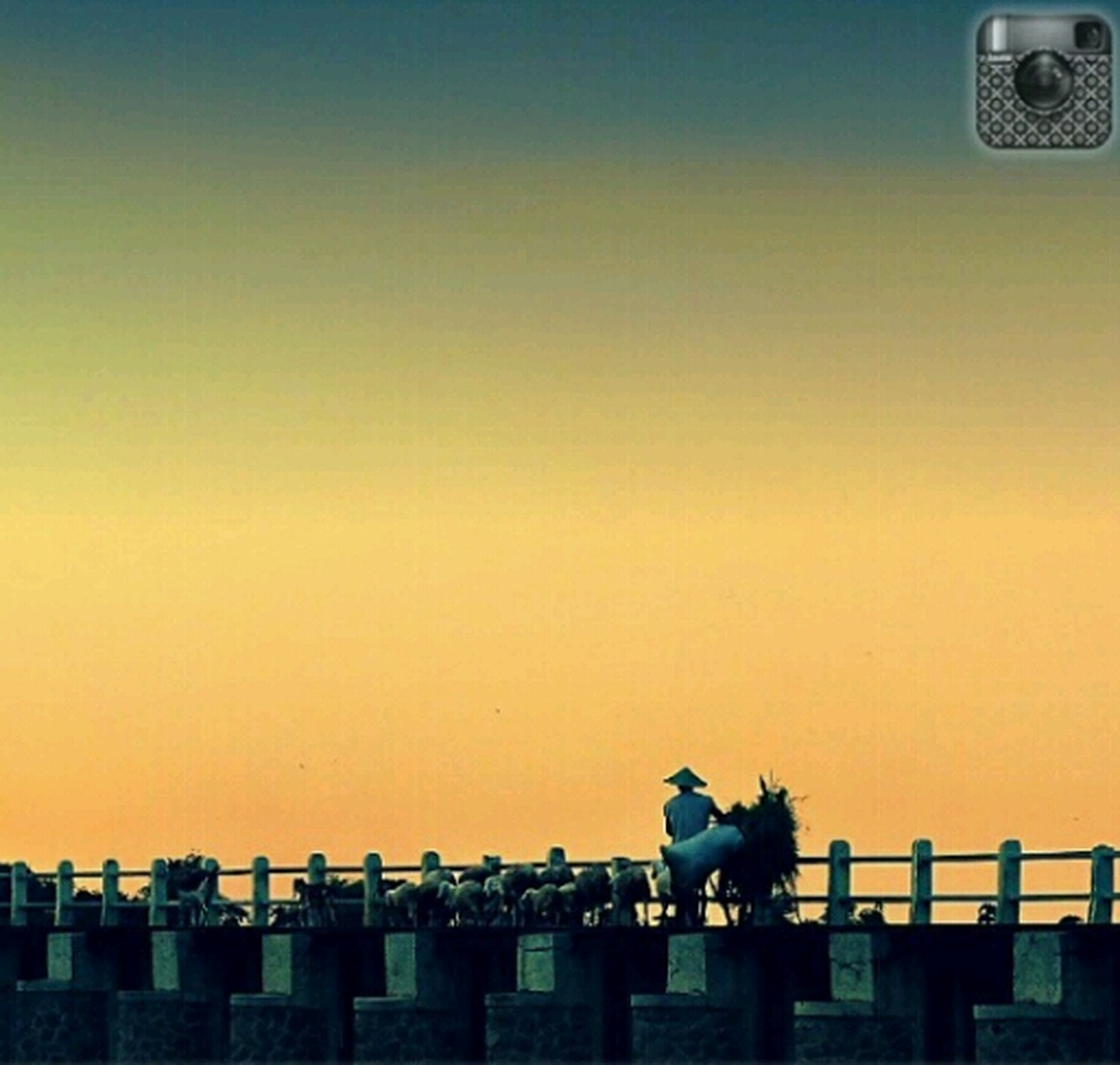 copy space, animal themes, one animal, clear sky, animals in the wild, bird, built structure, wildlife, sunset, perching, architecture, building exterior, yellow, low angle view, outdoors, no people, orange color, flying, roof, side view