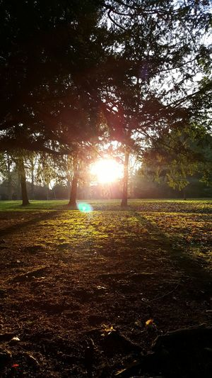 Nature Sunlight Backgrounds Beauty In Nature Growth Tree No People Scenics Green Color Outdoors Sky Day Trees And Sky Woolton Village Reynolds Park Liverpool Park Beams Of Light Shadows & Lights Shadow Light Flares Sun Flare Sunlight Tranquility