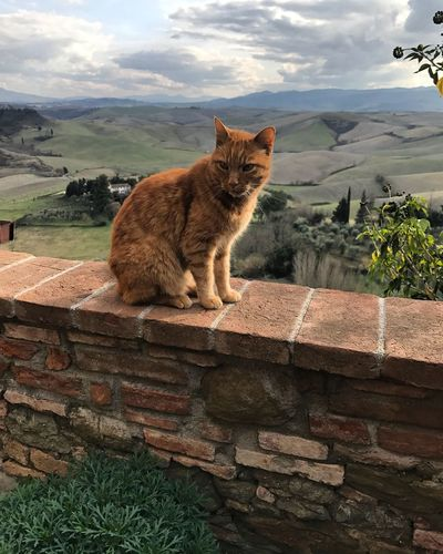 Cat in Tuscany Cat In Tuscany Tuscany Cat Mammal Pets Animal Themes Animal Feline Cat Domestic Animals Nature Domestic Cat Outdoors Sky