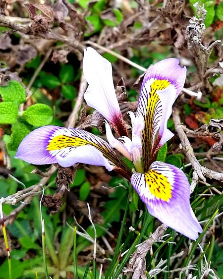 Orchids Flowers Wildorchid Wildflowers Nature Life Petals Perfection Outdoors
