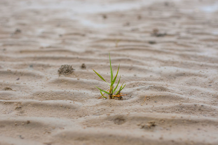 Beach Beauty In Nature Close-up Day Growth Mudflat Nature No People Outdoors Plant Sand Wadden Sea