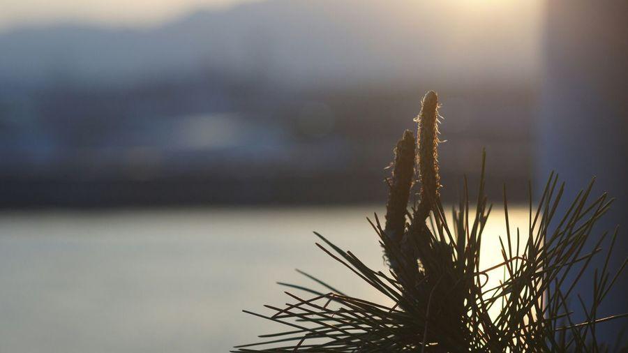 Sunset Sun Day Tree Ernst Leitz GmbH Wetzlar Elmar 9cm F4 Nex5