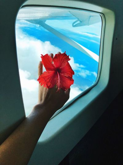 Flying over Hawaii Hibiscus Airplaneview Flying Hawaii Traveling In The Air Transportation Mode Of Transportation Nature Red Car Window The Traveler - 2019 EyeEm Awards