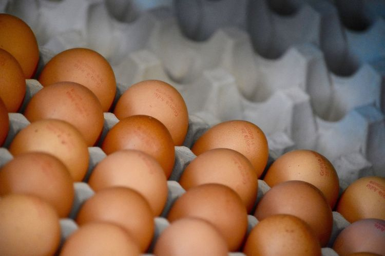 Close-up of eggs
