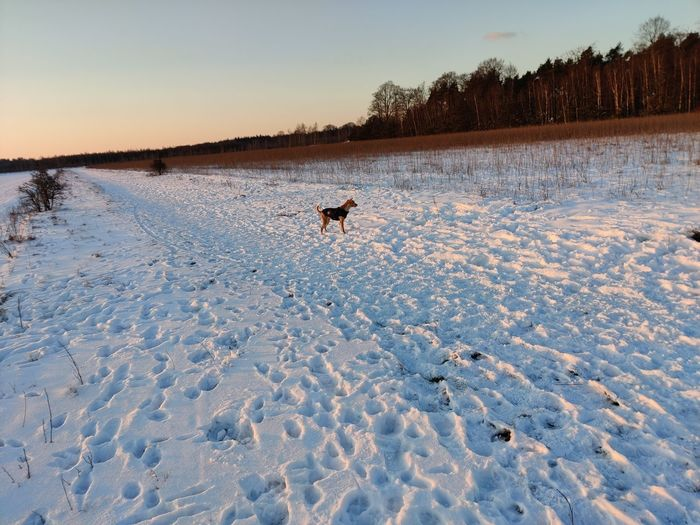 Dog on snow covered field during winter