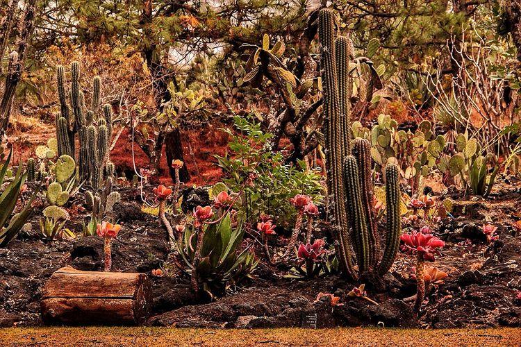Me pierdo en este paisaje Jardin Inspiracion Cactus Flower Ganjareta Momento De Ocio Canon T2i Ciudad Universitaria EyeEmBestPics Cactus Canonphotography Jardin Botanico EyeEm Nature Lover Nature Photography Naturaleza