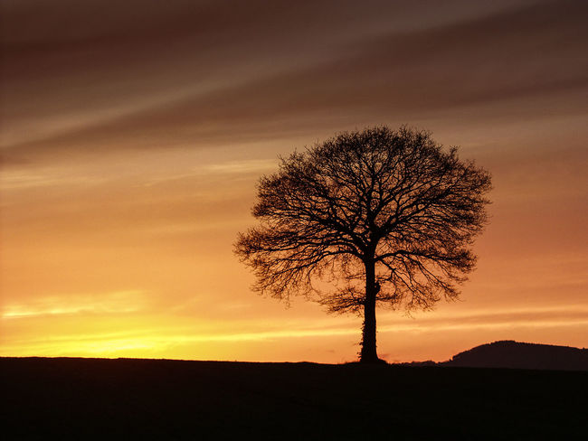 Worcestershire Uk Bare Tree Beauty In Nature Branch Horizon Over Land Isolated Landscape Lone Majestic Nature No People Outdoors Silhouette Sky Solitude Sunset Tranquil Scene Tranquility Tree Tree Trunk