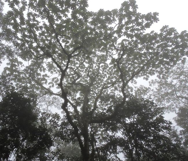 Foggy print. #foggy #foggymorning Backgrounds Beauty In Nature Branch Clear Sky Day Directly Below Forest Full Frame Growth High Land Low Angle View Nature No People Outdoors Plant Scenics - Nature Sky Sunlight Tranquil Scene Tranquility Tree Tree Canopy