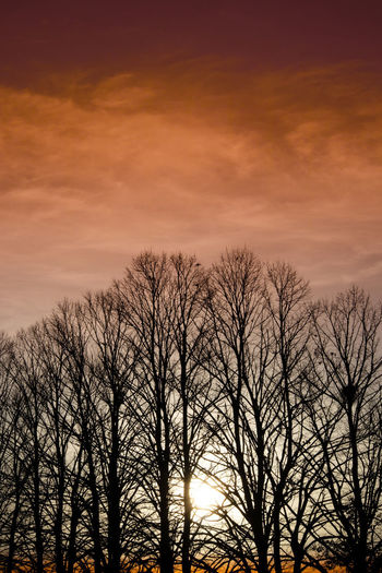 Low angle view of silhouette bare trees against romantic sky