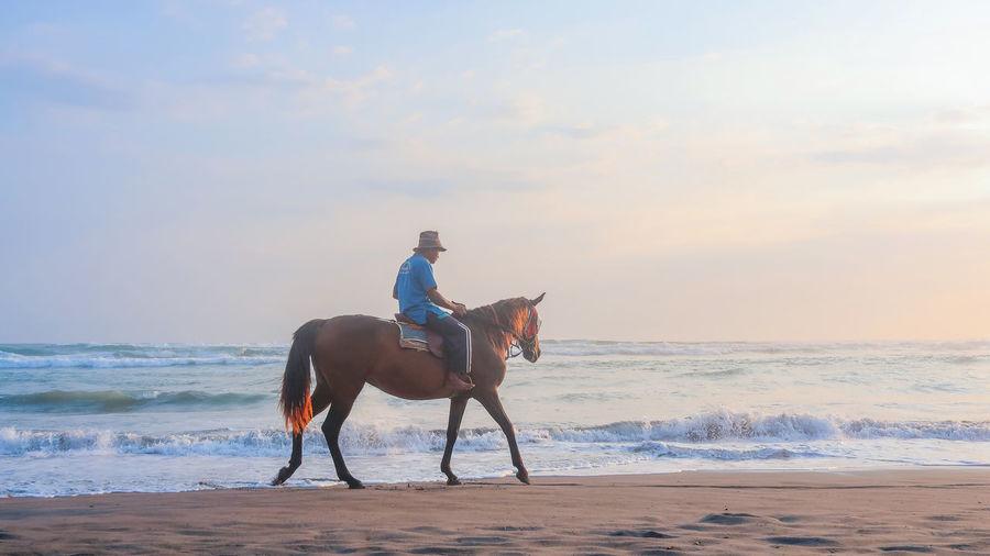 Horse riding horses on beach against sky