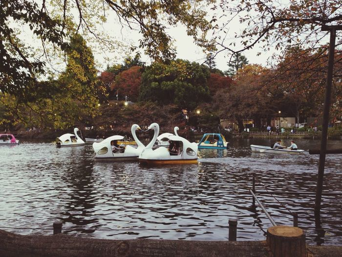 Swan Boat Heart ♡