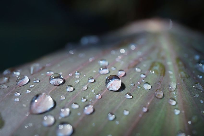 EyeEm Nature Lover Macro Flower Waterdrops Drops EyeEm Best Shots EyeEm Selects Water Wet Drop Close-up Dew Plant Life Purity RainDrop Rainy Season Focus Leaf Vein Blade Of Grass