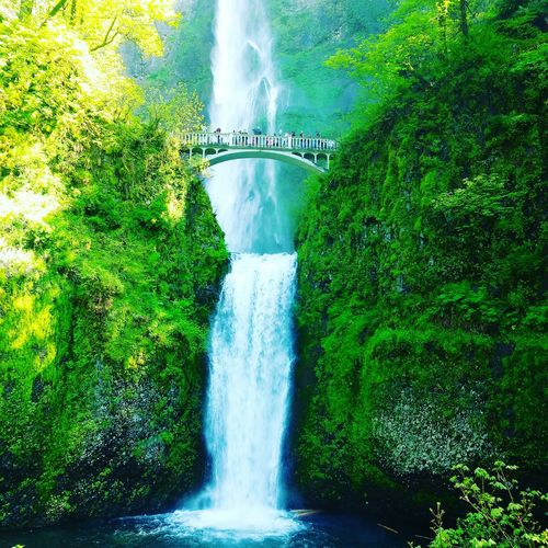 Water Motion High Angle View Waterfall Long Exposure Outdoors Swimming Pool Day Green Color Nature Spraying Tree Oregon Beauty In Nature