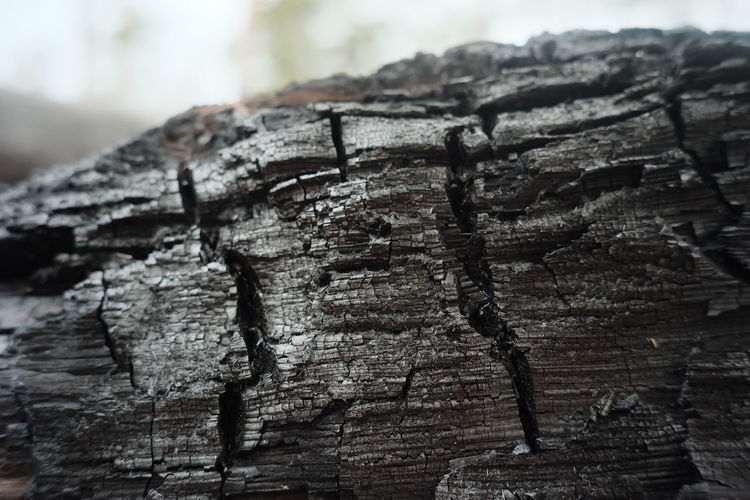Close-up of damaged tree trunk