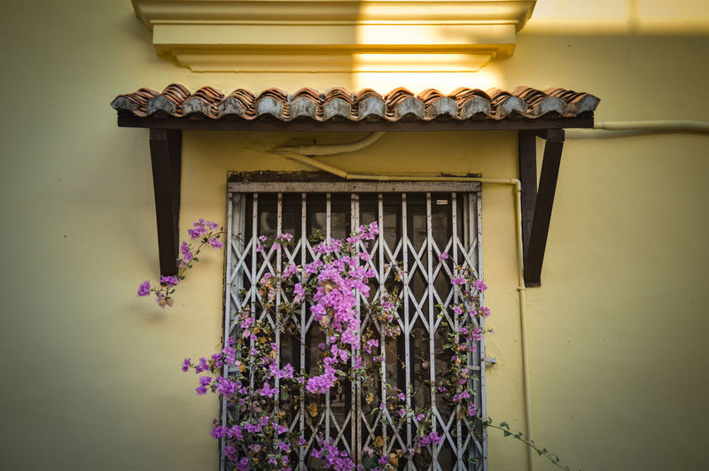 The Week On EyeEm Penang Island Penang Malaysia Yellow Wall Yellow Flower Purple Window Architecture No People Multi Colored Day Indoors  Close-up Pattern, Texture, Shape And Form Flowers On The Window Minimalism Architecture Walls And Windows Simplicity Home Design Paint The Town Yellow