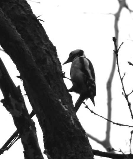 Im Wald Bride Animal Photography Vogel Wald Nature Photography Nature Photography EyeEm Animal Lover