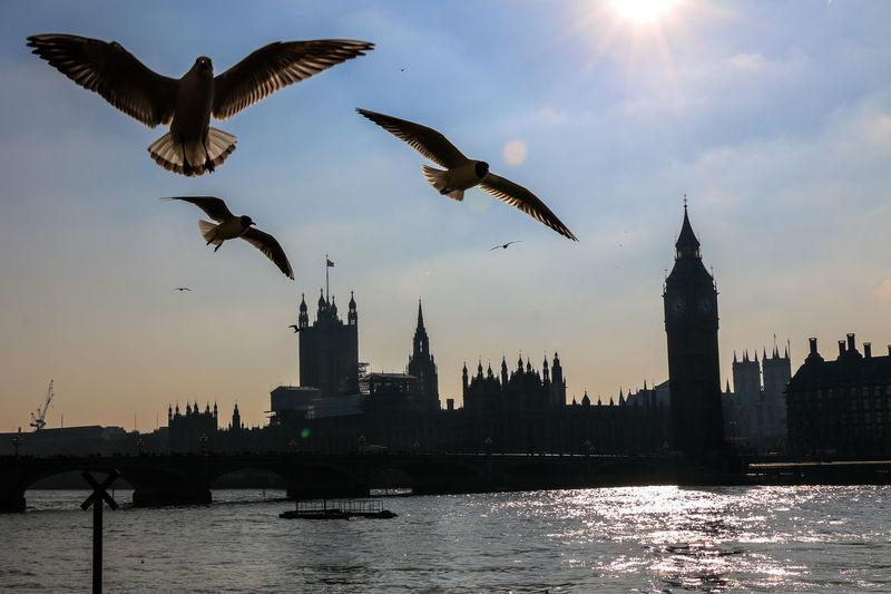 Birds flying over thames river against sky