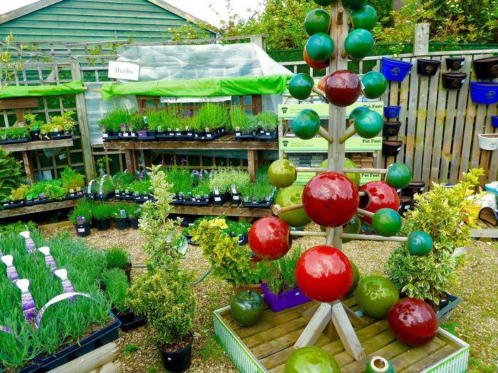 Garden Centre Flowers & Plants Flowers Plants Colourful Plant Pots