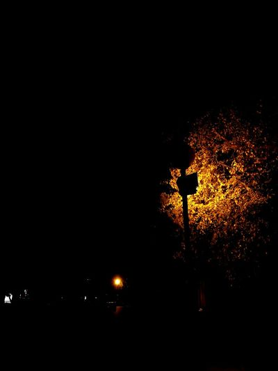 Taking Photos Relaxing Enjoying Life No People Lamp Romantic City Lights City Yellow Yellow Leaves Yellow Tree