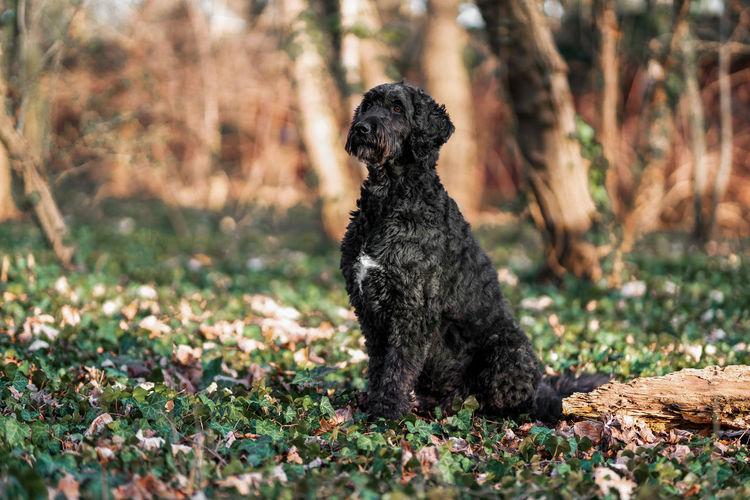Black dog sitting on land