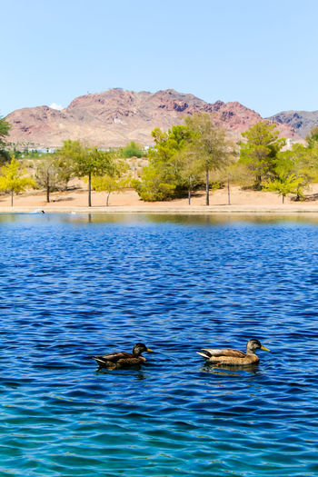 Ducks on a quiet lake Sky Nature Day No People Outdoors Water Animal Themes Animal Animal Wildlife Animals In The Wild Group Of Animals Vertebrate Mountain Swimming Lake Waterfront Bird Two Animals Beauty In Nature Scenics - Nature Ducks Landscape