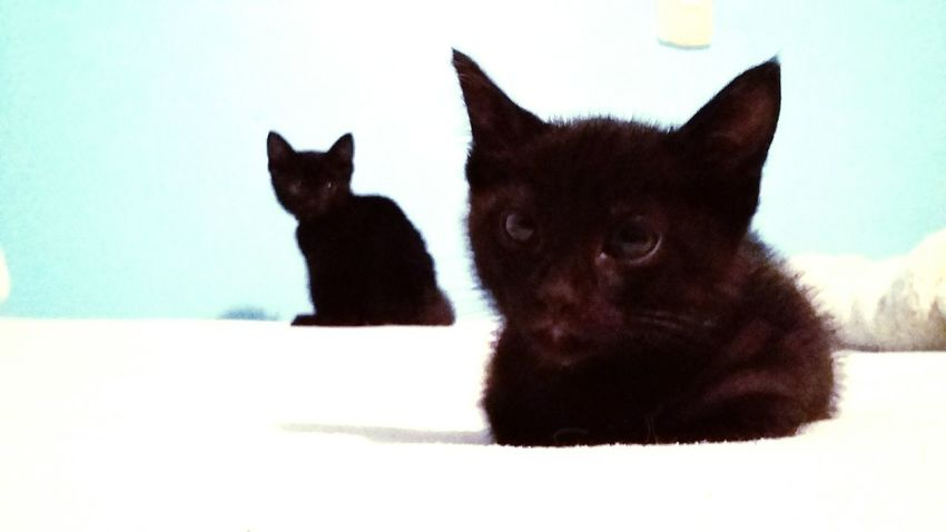 Cute Brothers Taking Photos Babycat Cat Pets Blackcats Animals Check This Out Relaxing