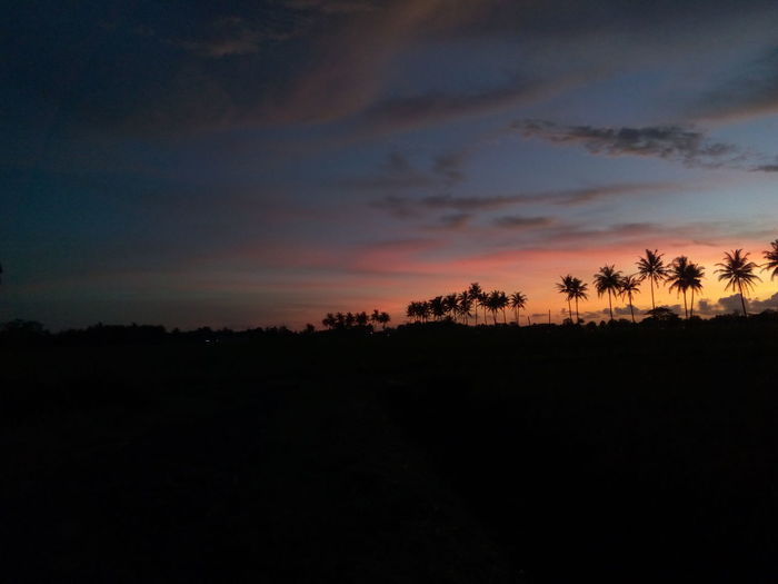 Sunset di sawah Sunset Silhouettes Beauty In Nature Indonesia_photography Nature Nature_collection No_edits Sunset Sunset #sun #clouds #skylovers #sky #nature #beautifulinnature #naturalbeauty #photography #landscape Tree First Eyeem Photo EyeEmNewHere