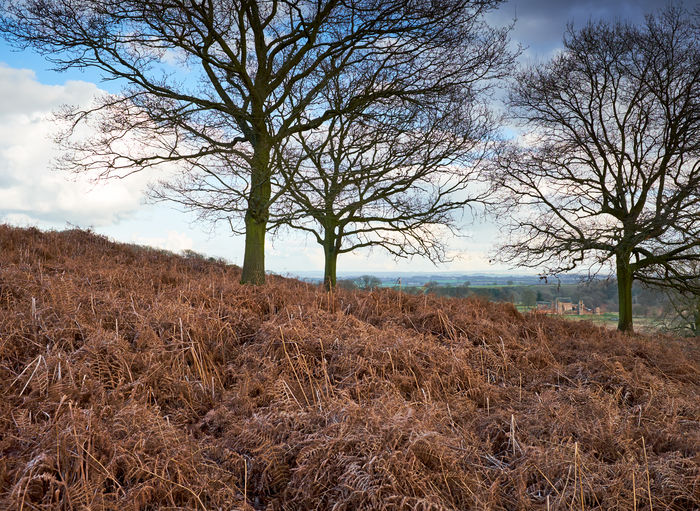 Bradgate park . Change Season  Outdoor Photography Woods Graduated Bradgate Park Outdoors Agriculture Non-urban Scene Dry Day Growth No People Bare Tree Scenics - Nature Nature Beauty In Nature Environment Cloud - Sky Landscape Field Tree Land Tranquil Scene Plant Tranquility Sky British Culture My Best Photo