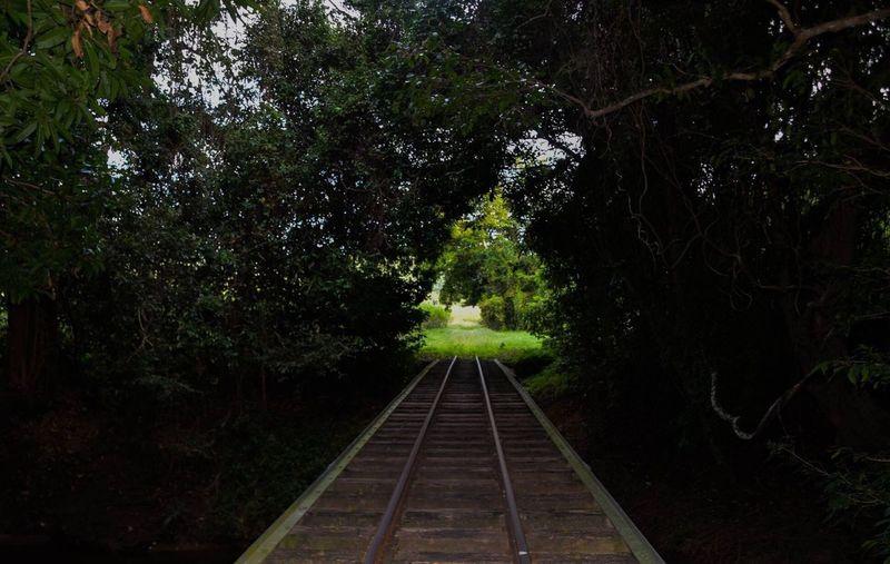 Cane Train Track Train Line Traintrack Rainforest Magical Garden Light Shadow