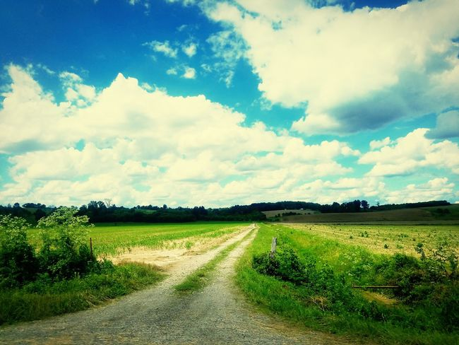 Agriculture Field Rural Scene Landscape Cloud - Sky Crop  Beauty In Nature Scenics No People Sky Growth Day Nature Outdoors Freshness Live For The Story The Great Outdoors - 2017 EyeEm Awards Let's Go. Together.