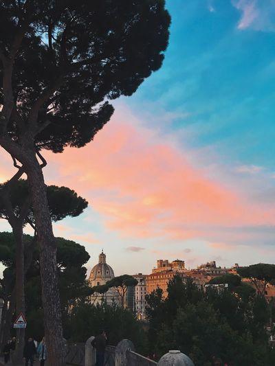 Italy Rome Tree