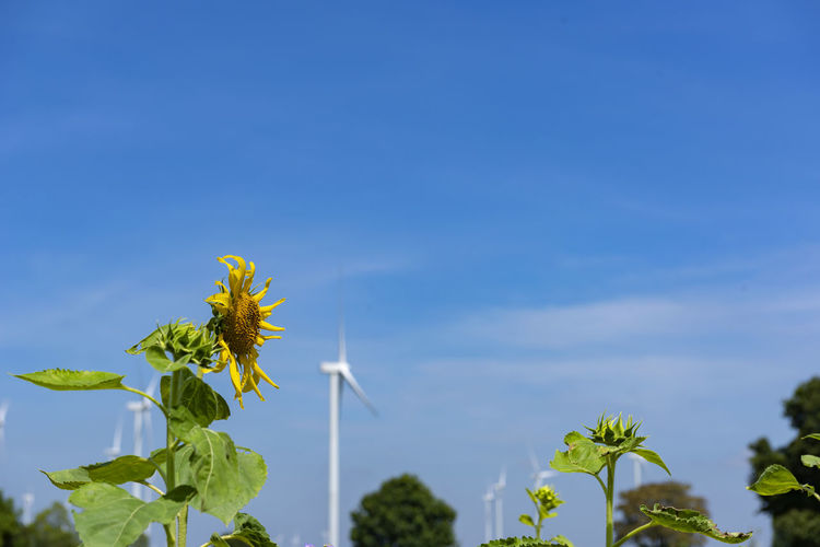 Yellow flowering plant against blue sky