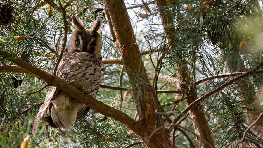 Tree Branch Nature Animals In The Wild Day Feather  No People Outdoors Beauty In Nature Bird Wood Look Looking At Camera Sleepy Ears Up
